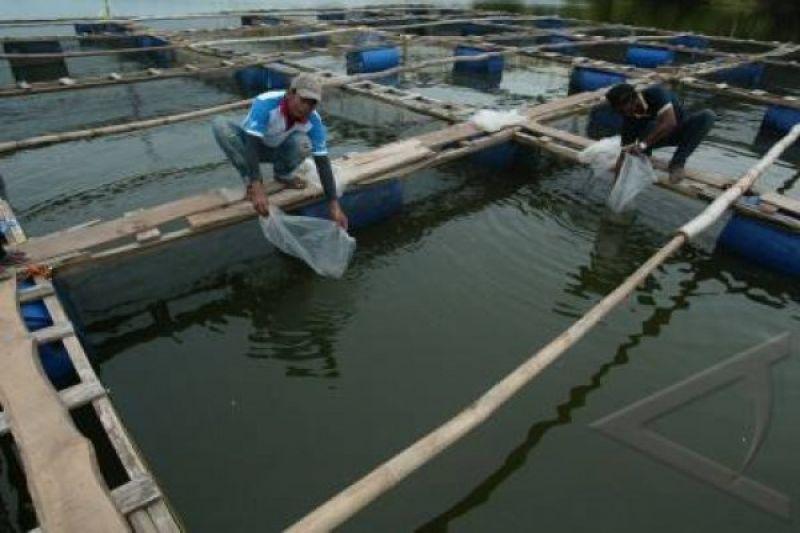 Waspadai, fluktuasi suhu bisa pengaruhi produksi ikan