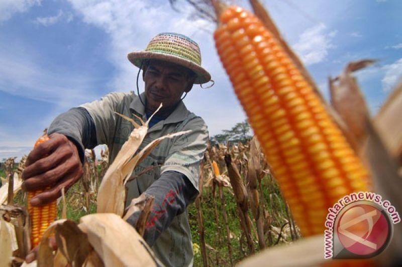 Ganjar ajak bupati turunkan harga jagung