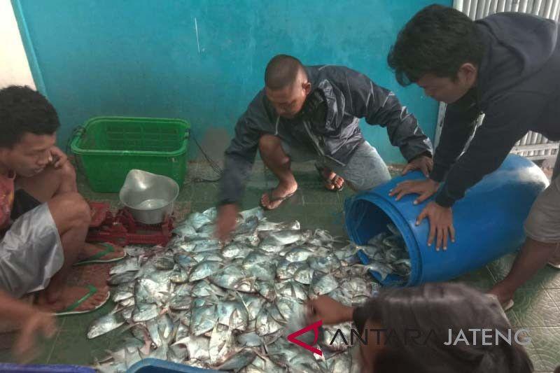 Nelayan Teluk Penyu Cilacap panen bawal putih
