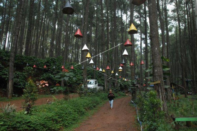 Hutan wisata sigrowong pjb80d prv