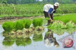 Bantul bentuk Taruna Tani siapkan generasi petani