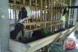 Bantul akan tambah demplot peternakan kambing