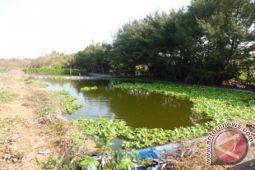 DKP dorong pemakaian pakan ikan mandiri