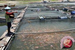 Bantul usulkan bantuan perikanan pokdakan terdampak banjir