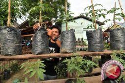 Sleman manfaatkan pekarangan sebagai sumber ketahanan pangan