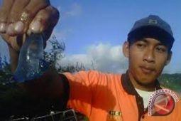 SAR imbau wisatawan waspadai ubur-ubur