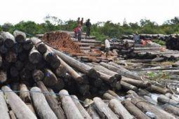 Asmindo minta rencana ekspor kayu gelondongan dibatalkan