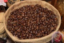 Pokdarwis Gunung Gambar tanam kopi robusta