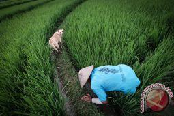 Petani Kulon Progo yang ikut asuransi rendah