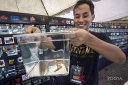 Yogyakarta tuan rumah festival guppy terbesar dunia