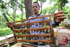 warga Kulon Progo membudidayakan lebah liar