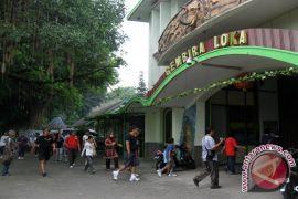 Wakil Yogyakarta-Kulon Progo juarai lomba GL Zoo