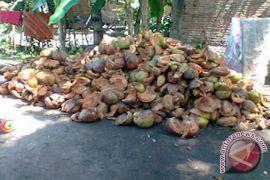Industri serat kelapa bisa perkuat ekonomi rakyat