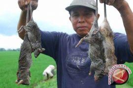 Yogyakarta tingkatkan kewaspadaan leptospirosis