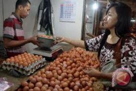 Produksi telur ayam di Sleman mencukupi