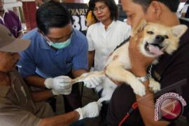Disnak Gunung Kidul vaksin hewan peliharaan