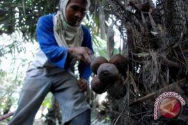 FAO gelar pameran produk pertanian organik Merapi