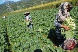 Indonesia memiliki potensi besar mengembangkan pertanian organik
