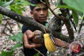 Ini fakta lemak kakao mampu membuat kulit lembut