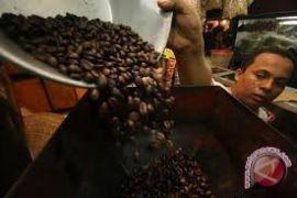 Tanaman kopi di Merapi mati kekeringan