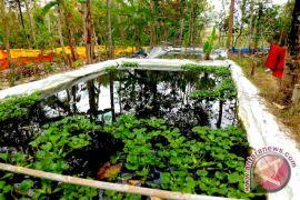 Pembudidaya ikan Kulon Progo kesulitan mendapatkan benih gurami