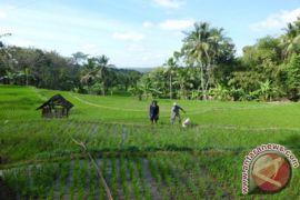 Gunung Kidul ditargekan tambah tanam 60.000 hektare