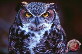 Pertamina membantu rumah konservasi burung hantu
