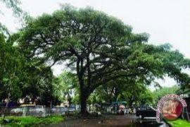 BLH imbau warga memangkas pohon terlalu rindang