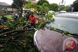 BPBD : hujan menyebabkan pohon tumbang 62 titik