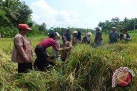 BKPP mendorong regenerasi SDM pertanian