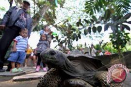 Gl Zoo wacanakan buka malam hari