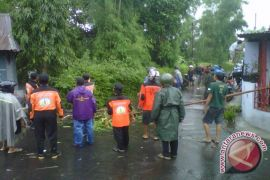 BPBD Gunung Kidul imbau masyarakat memangkas pohon