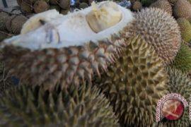 Kulon Progo kembangkan kawasan durian