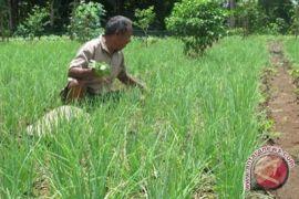 15 hektare lahan bawang Bantul terendam air