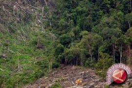 Pesawat latih jatuh di Playen Gunung Kidul
