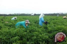 Petani pesisir Kulon Progo minta dibuatkan jalan