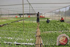 Sultan: sayuran dari luar harus penuhi syarat