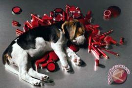 Uji kosmetik pada hewan banyak terjadi