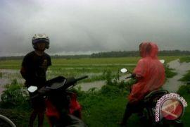 Kulon Progo targetkan asuransi usaha tani 3.000 hektare