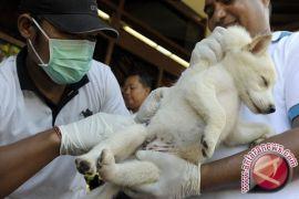 Vaksinasi rabies di Yogyakarta ditunda tunggu ketersediaan vaksin