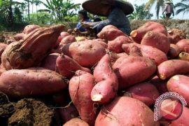 Bupati : Wujudkan ketahanan pangan untuk masyarakat sejahtera