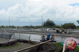 Warga Kulon Progo tolak pembangunan tambak udang