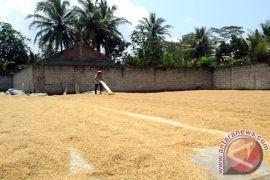KUD diminta menyerap gabah petani bersama Bulog