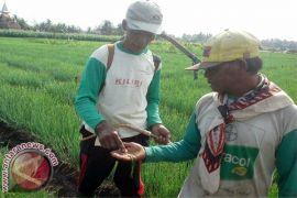 BPTP Yogyakarta minta petani menggerakkan penanaman refugia