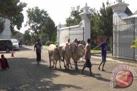 RPH Giwangan Yogyakarta buka pendaftaran penyembelihan hewan kurban