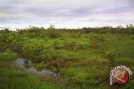 Hugelkultur alternatif pembukaan lahan pertanian