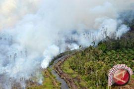 BNPB: siaga darurat kebakaran hutan-lahan di empat provinsi
