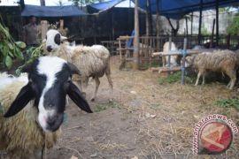 Pemkab serahkan hewan kurban kepada takmir masjid