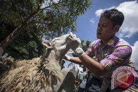 Bantul libatkan UGM periksa hewan kurban