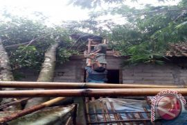 BPBD: hujan deras sebabkan pohon tumbang